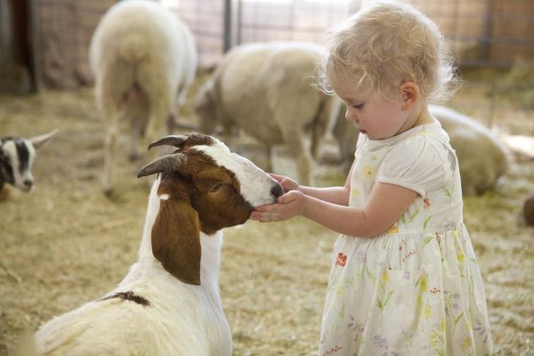 Royal Easter Show – Royal Agricultural Society NSW